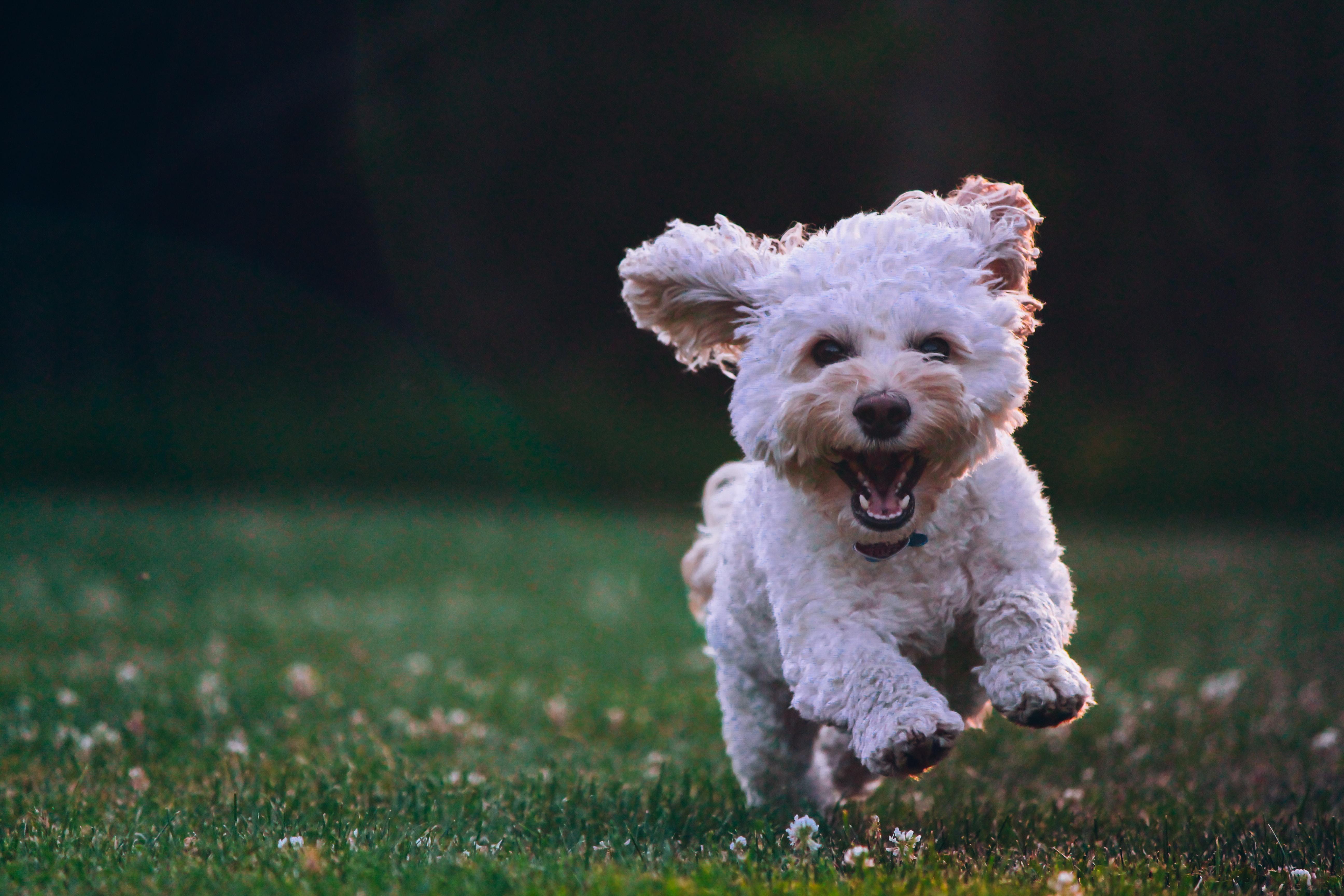 joe caione qO PIF84Vxg unsplash - Vælg det rigtige hundefoder til din hund
